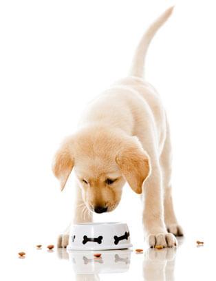 Recept natuurlijk hondenvoer